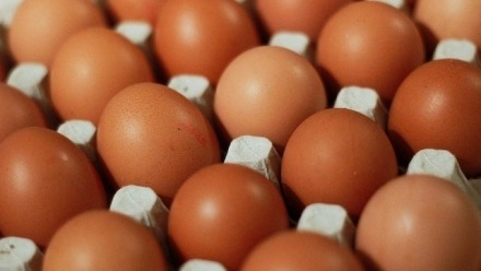Incipient Infertility: Tracking eggs and ovulation across the life course